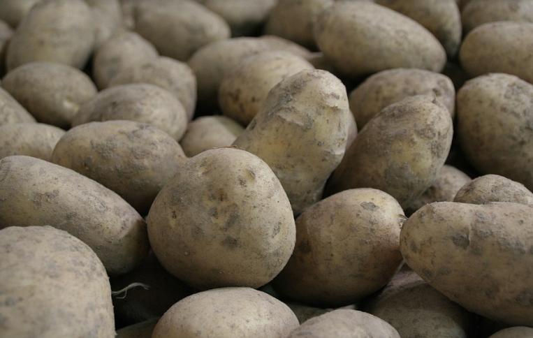 Qualität der Kartoffel