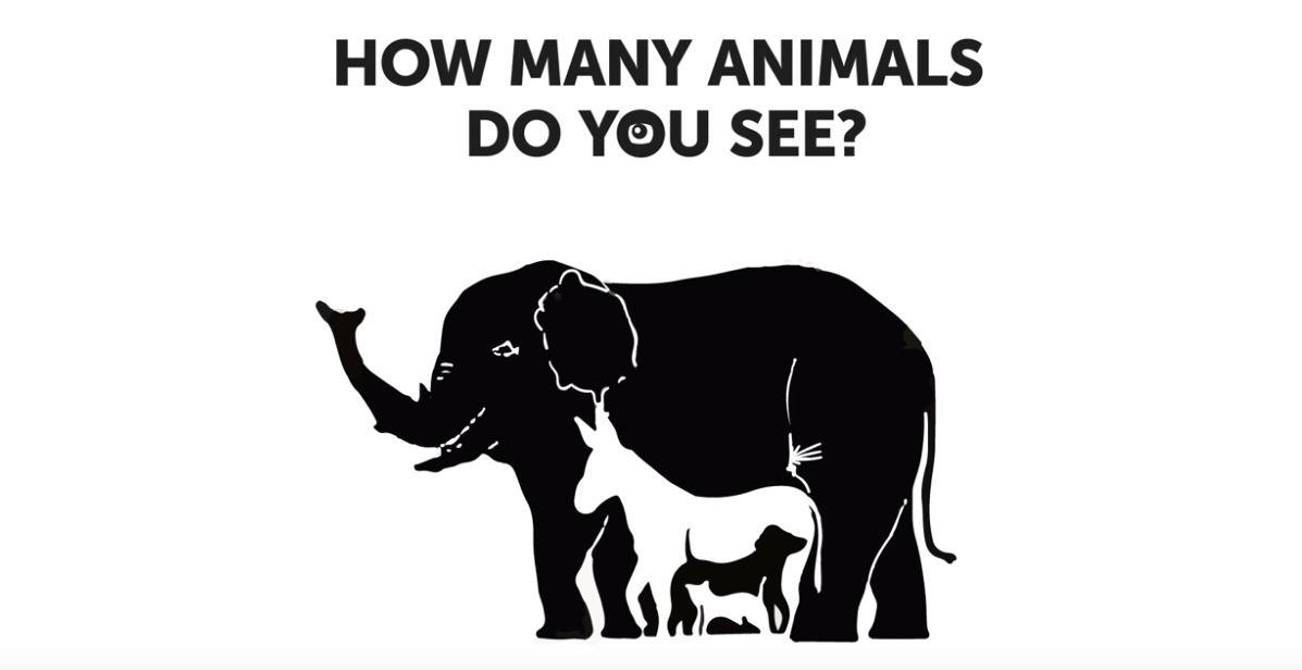 Tiere Rätsel