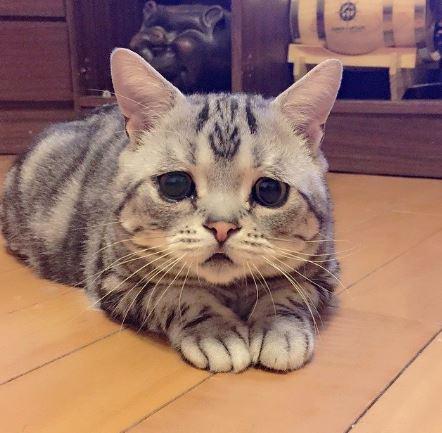 12 Katzen
